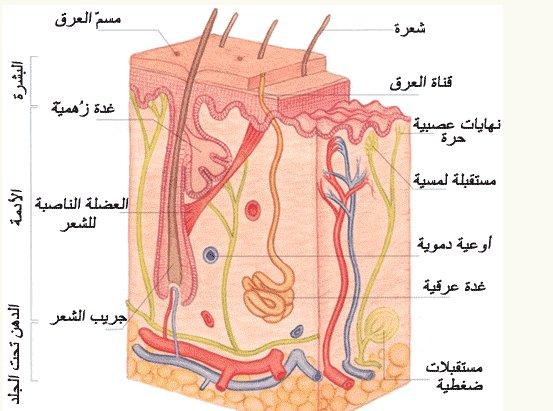 إضطرابات الشعر المختلفة