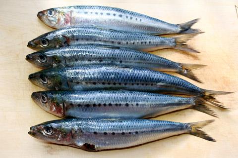 أفضل أنواع الأسماك المقوية للجنس
