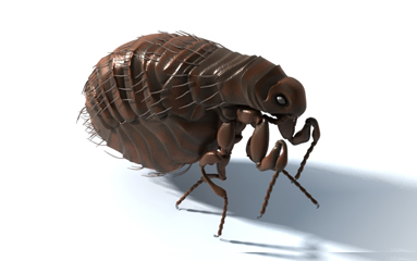 حشرات المنزل الضارة و كيفية القضاء عليها