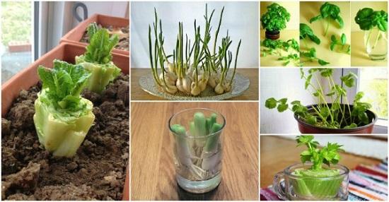 كيفية زراعة النبات فى الاوعية التى لا تسرب الماء