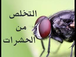 كيفية التخلص من الحشرات الطائرة الصغيرة