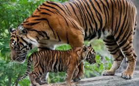 ًصور حيوانات نادرة 2017 - صور حيوانات غريبة الشكل -صور حيوانات لم تراها من قبل