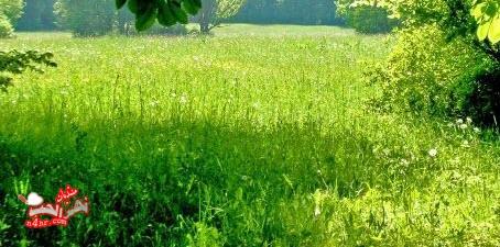 تفسير رؤية الزرع الأخضر في المنام