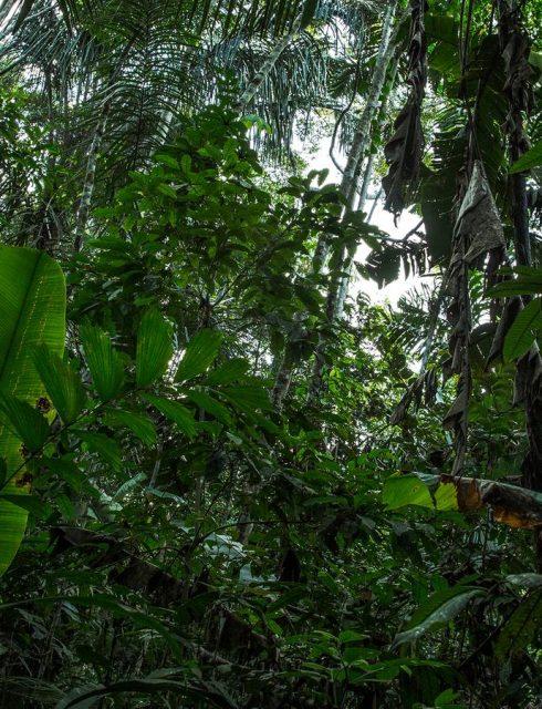 اسرار غابات الامازون
