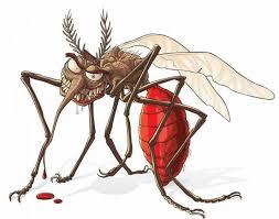 طرد الحشرات الطائرة من المنزل