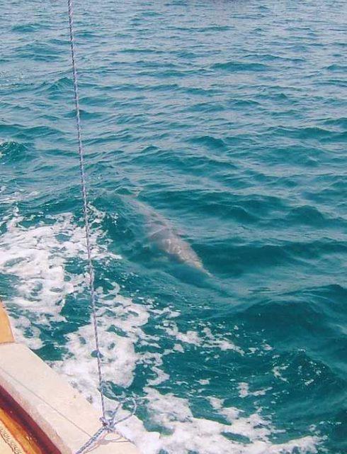 أفضل المواقع لمشاهدة  الدلافين في عمان