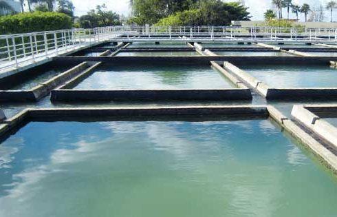 المياه و عمليات التنقية و الترويق