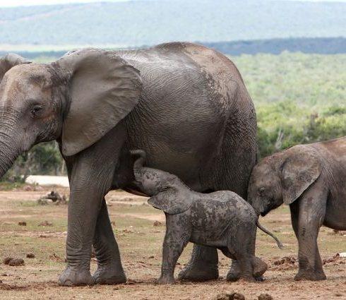ما هي الثدييات