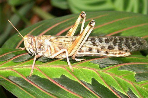 الحشرات النافعة
