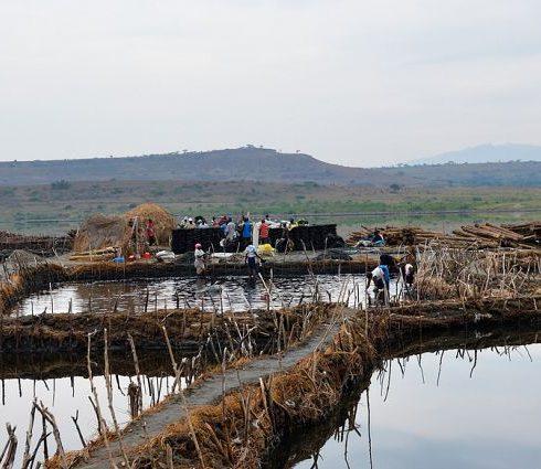 ما هي الموارد الطبيعية الرئيسية لأوغندا