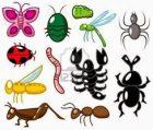 طريقة التخلص من الحشرات المنزلية