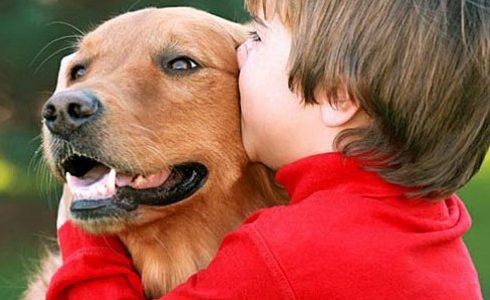 تربية الكلاب المنزلية