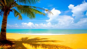 coconut-tree-at-beach-nature-wallpaper_ivs1z7t