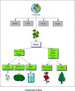 plantclass1