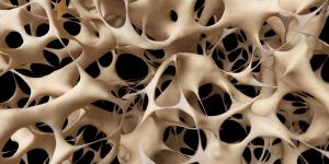 bonecells-1
