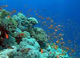 تعريف البحار والمحيطات
