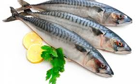 Benefits of mackerel fish for body health