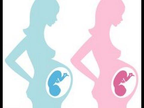 نوع الجنين
