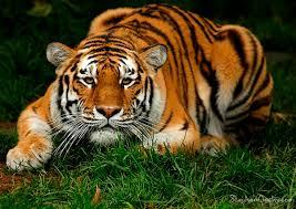 ًصور حيوانات نادرة 2017 – صور حيوانات غريبة الشكل -صور حيوانات لم تراها من قبل