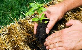 تعرف علي بيئات النمو أو التربة الملائمة للزراعة