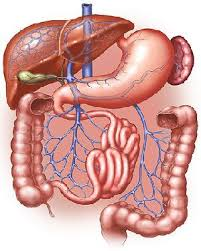 اعراض امراض الجهاز الهضمي