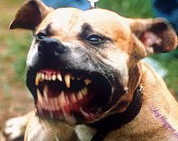 اخطر واشرس كلاب في العالم