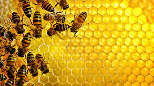فوائد تناول ملعقة عسل قبل النوم