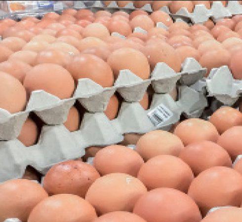 دراسة جدوي مشروع توزيع البيض في مصر