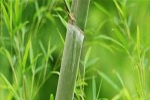 top-quality-plastic-bamboo-leaves-bamboo-leaves